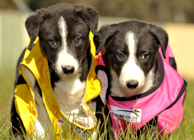 Puppies wearing rugs